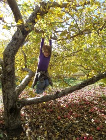 Swinging into fall at the apple orchard, Armada, MI